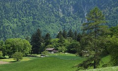 un petit coin tranquille (bulbocode909) Tags: nature suisse champs vert arbres bex campagne paysages vaud forts