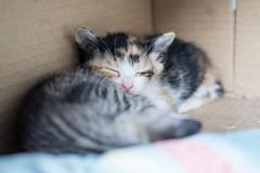 P4085831 (daisuke1230) Tags: cat olympus neko em  m43