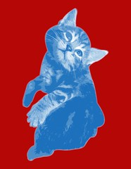 gato1 (Charlieatoz) Tags: cats andy cat kitten kitty kittens gatos pop maternity popart gato kitties warhol maternidad