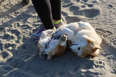 IMGL7669 (komissarov_a) Tags: ocean life friends dog greyhound pets love water animals loving training newfoundland fun sand play friendship mastiff streetphotography rottweiler terrier management together siberianhusky precious boxer 5d streetphoto germanshepherd rgb protection partnership defenders pyrenees alike noble kuvasz bullmastiff  lovedones owners dogsowners breeds dobermanpinscher komondor germanpinscher      komissarova    canonm3