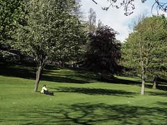Contemplate (J.Robinson93) Tags: street camera trees sun colour grass digital landscape four photography scotland town photo edinburgh candid streetphotography olympus panasonic micro 17 capture scots thirds 25mm mkii em10 mirrorless