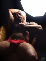 Mr. Bear Austria 2016 (Red Jock) (WF portraits) Tags: red portrait hairy man male jock studio beard chair very chest aut mrbear irq gaybear