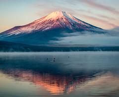 2016 January Fuji (shinichiro*_back) Tags:    jp 20160102ds22453 2016 crazyshin nikond4s afsnikkor2470mmf28ged fuji lakeyamanaka yamanashi japan january winter  candidate