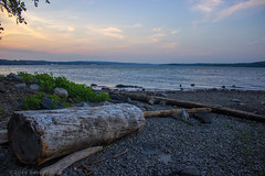 Driftlogs along the Hudson (Amy ::) Tags: driftwood hudsonriver logs hurricanesandy remnant dusk evening twilight cornwall newyork