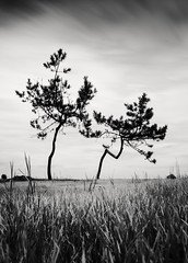 A Dream within a Dream (hiromichiendo) Tags: blackandwhite bw abstract tree art nature monochrome japan landscape still fineart silence zen nd minimalism tranquil