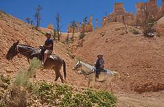 Horse ride at Bryce 13 (Dave Bezaire) Tags: utah unitedstatesofamerica brycecanyon slandscape sanimal vedit sperson label~ rating4~ csouthwest