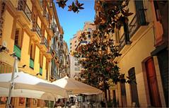 Une rue  Malaga, Andalucia, Espana (claude lina) Tags: claudelina espana spain espagne andalucia andalousie malaga architecture rue street parasol magnolia