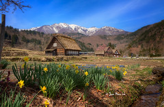 Japanese Alps! (stuckinparadise) Tags: stuckinparadise japan shirakawago ogimachi gesso hut daffodils spring unesco worldheritage farm agriculture landscape