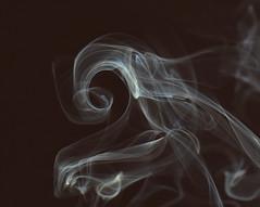 KH fern frond (Seabird NZ) Tags: newzealand christchurch sunlight fern reflections smoke canterbury frond forms ghosts backlit incense kelvinhelmholtz weirdshapes sigma120300mmf28 khwave nikond810a