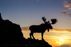 Alce al atardecer (_Estrella_) Tags: sunset espaa contraluz toy atardecer andaluca granada