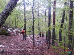 Covaleda - Senda los Bretos - Pico Castillo  (22) (Historia de Covaleda) Tags: espaa spain fiesta paisaje douro pinos soria historia pinar tradicion duero covaleda