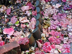 Finally the Rain Came (mikecogh) Tags: red wet leaves rain garden fallen soggy potpourri edging