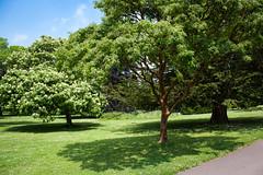 "Dyffryn Gardens • <a style=""font-size:0.8em;"" href=""http://www.flickr.com/photos/32236014@N07/9095721001/"" target=""_blank"">View on Flickr</a>"