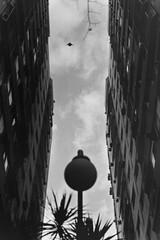 Entre dos (.pramundo) Tags: building bird argentina arquitectura pentax dove crossprocess edificio paloma lucky asa200 arquitecture c41 p50 capitalfederal