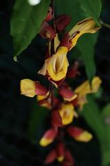(T_Uccelli) Tags: flower macro garden samsung 60mm nx smartcamera nx300 nx60mm samsungsmartcamera