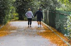 Orange Race (chrispenfold) Tags: park autumn orange leaves leaf sthelens sherdley sherdleypark