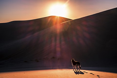 The Imperial Sand Dunes (Brock Whittaker Photography) Tags: california sunset shadow arizona dog sun southwest landscape photography sand fuji desert dunes sunny imperial brock dust germanshepherd arid yuma whittaker xe1 fujixe1