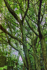 Trees (Critque welcome) (Trevor King 66) Tags: wood trees texture leaves nikon branches layer trunks d3100