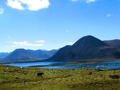 羊湖湖水碧波如镜,湖滨水草丰美,是一个丰饶的高原牧场