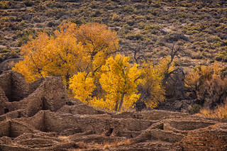 Chaco Canyon Ruins and Cottonwoods