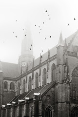 Grote of Sint Bavo kerk (ProperPictures) Tags: mist church haarlem birds fog pigeons kerk duiven bavo