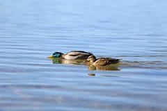 IMG_6931 (nathaliecheng) Tags: lake tahoe 2014