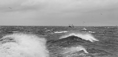 100 X - Fifteen (linlaw39) Tags: winter blackandwhite bird nature wet water weather mono scotland boat blackwhite waves aberdeenshire harbour fishingboats seashore stormysky trawler stormyweather winterstorm 2014 seatown northeastcoast lindal wildwaves highwinds galeforcewinds stormysea northeaststorm wildsea fraserburghharbour canonpowershotg12 february2013 grampianuk 100xthe2014edition 100x2014 100xproject project100x 15022014 image15100 15of100x 15thfeb14