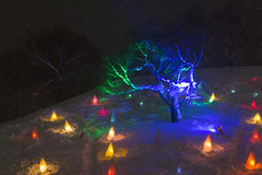 Cherry tree with snow /  (yanoks48) Tags: snow japan night hokkaido   otaru      mttengu otarusnowlightpath