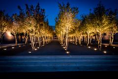 Kimball Arts Trees (StevenSmith1) Tags: longexposure trees lights nights fortworth kimballartsmusuem