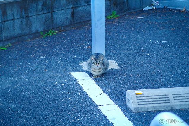 Today's Cat@2014-03-14