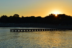 These sunsets... Only in Duna Verde (francescasiccardi95) Tags: sunset sun beach tramonto sole spiaggia oro pineforest pineta dorato dunaverde