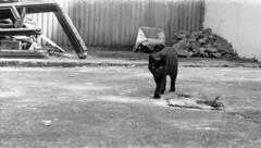 Lubitel 166B - Street Cat (Kojotisko) Tags: bw animal cat brno cc creativecommons lubitel vintagecamera czechrepublic lubitel166b selfdeveloped fomapan100