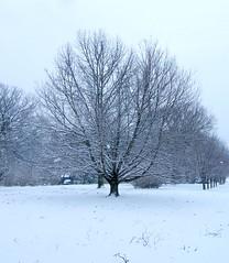 Naked Winter Snowy Tree