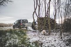 Im Winter (alexanderkoch) Tags: schnee snow cold work austria countryside frozen sterreich frost working wiese freezing gras icy holz kalt burgenland arbeiten strem gefroren lndlich eisig amland