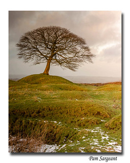 Solitary Tree - Winter Evening