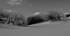 "un paradiso... incontaminato ("" paolo ammannati "") Tags: trees snow alberi neve paoloammannati montefalterona 1001nightsmagiccity albericonneve"