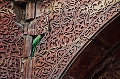 Qutub Minar, Delhi. The the surrounds of the tomb of Slave Dynasty ruler, Iltutmish, the second Sultan of Delhi (r. 1211–1236 AD - it had a dome  which has since collapsed. (siddharthasen42) Tags: india green bird nikon delhi tomb parrot qutubminar islamicart ssen iltutmish