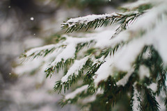 winter branches (Shandi-lee) Tags: winter brown white snow ontario canada tree fall love ice pine photoshop photography snowflakes grey soft branch snowy snowstorm february snowfall tones 50mmf14 muted winterstorm lightroom oshawa winterscene fallingsnow 2015 snowybranch canoneos7d shandilee shandileecox shandileephoto shandileephotographycom