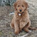 Dazzle's past puppies