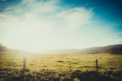 Field of Light (coalphotography) Tags: travel sunset alex sunrise photography cow cows australia victoria vic alexander greatoceanroad twelveapostles 12apostles 2014 theapostles capturethemoment legaree coalphotography alexanderlegaree alexlegaree wwwcoalphotographycom wwwfacebookcomcoalphotography