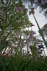 _DSC9984 (aeschylus18917) Tags: flower nature japan   ibaraki hitachinaka ibarakiken     hitachinakashi hitachiseasidepark danielruyle aeschylus18917 danruyle druyle   kokueihitachikaihinken