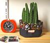 Garden (Carol Grilo • FofysFactory®) Tags: plant planta brasil cacti garden handmade jardin craft fabric decor decoração cacto tecido cachepot fofysfactory cachepo caroglrilo cachefofys