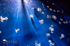 5D__5416 (Steofoto) Tags: genova porto pesci acquario darsena crostacei rettili cetacei molluschi