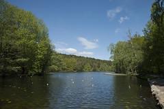 Sltta damm (hkkbs) Tags: gteborg pond sweden gothenburg sverige damm westcoast vstkusten slttadamm nikond800 bjursltt tamronsp2470mmf28divcusd