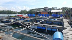 Pulau Ubin fish farm (wildsingapore) Tags: nature island marine singapore underwater wildlife coastal shore threats intertidal seashore pulau marinelife ubin aquaculture wildsingapore