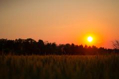 (Sirin's World) Tags: sunset sundown apocalypse peaceful naplemente bks apokalipszis