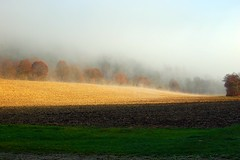 Landscape (Yelliholm) Tags: morning autumn light fog landscape landschaft