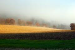 Landscape (Yelliholm) Tags: morning autumn light fog landscape landschaft