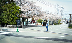 DSC07416 (Ustulo) Tags: japan spring ise iseshi isegrandshrine
