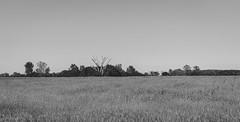 I Don't Belong Here (pooshda) Tags: trees blackandwhite bw tree nature monochrome field zeiss vintage landscape dead outdoors flat farm empty sony country meadow monochromatic minimal retro 55mm pasture incar alive alpha plain minimalist emptiness rolling lowcontrast a7rii